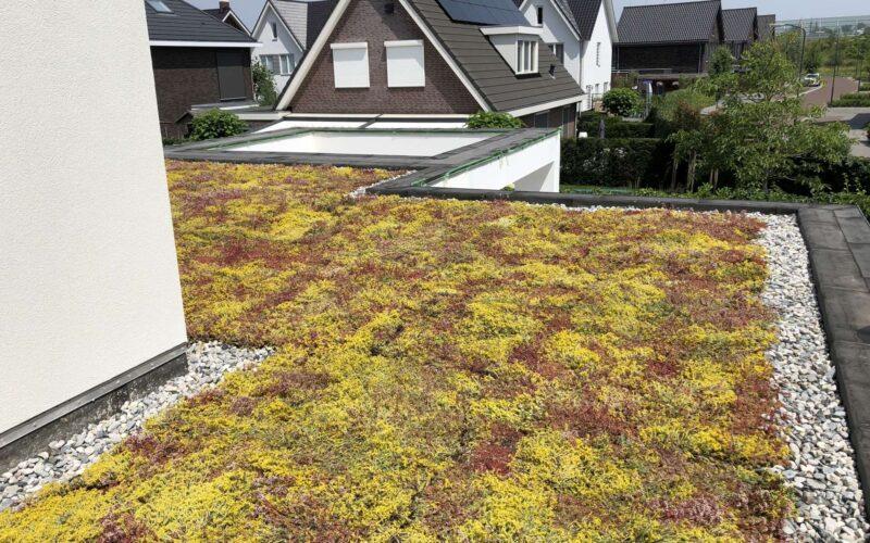 Groendak privéwoning – Breda